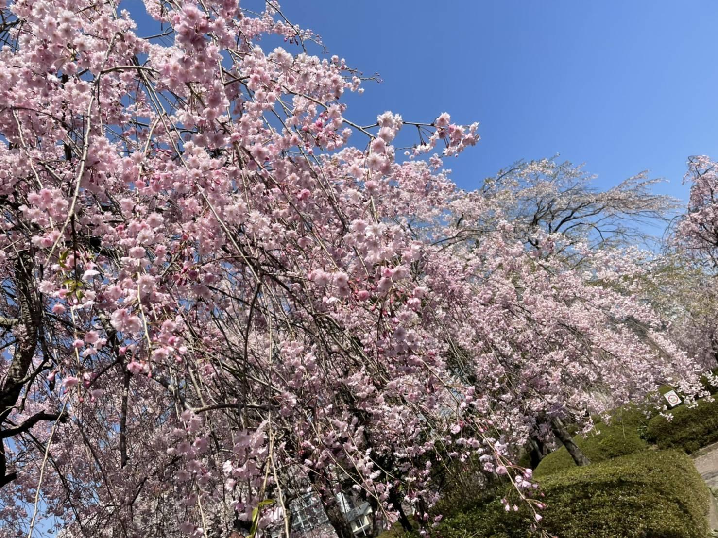 桜 永光トーヨー住器の現場ブログ 写真4